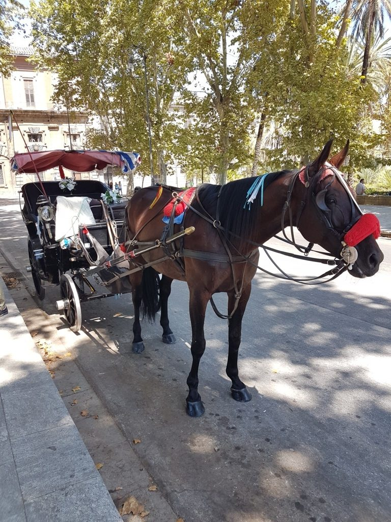 La carrozza di cavalli a Palermo