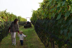 cosa fare nelle Langhe perdersi tra le vigne