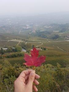 foglia autunno nelle Langhe