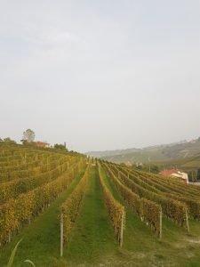 le vigne langarole