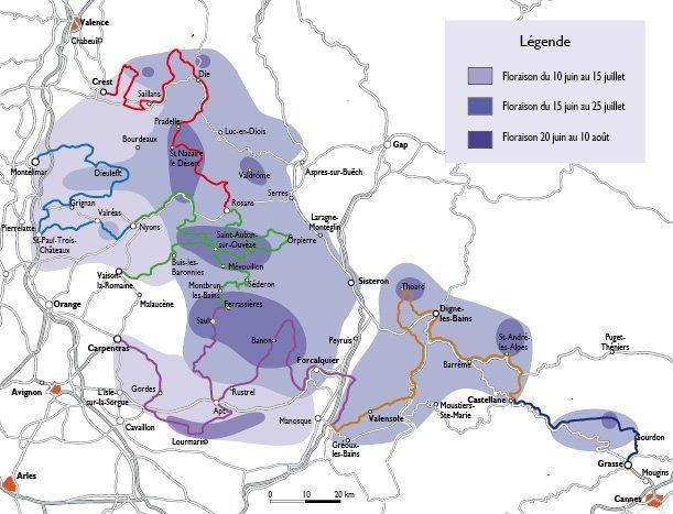 La mappa delle fioritura della lavanda in Provenza