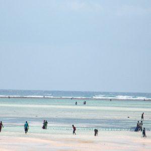 Pesca con la bassa marea a Zanzibar