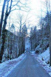 Strada tra boschi innevati