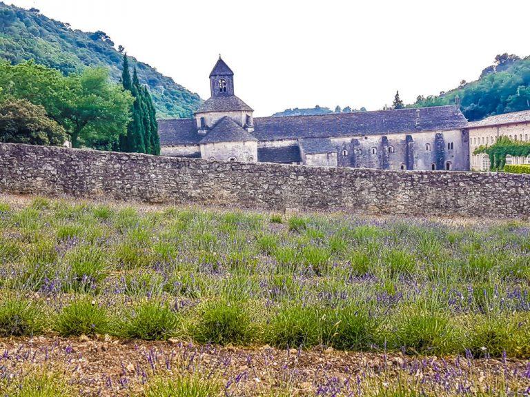 Abbazia di Sénanque e lo spettacolo della fioritura della lavanda in Provenza