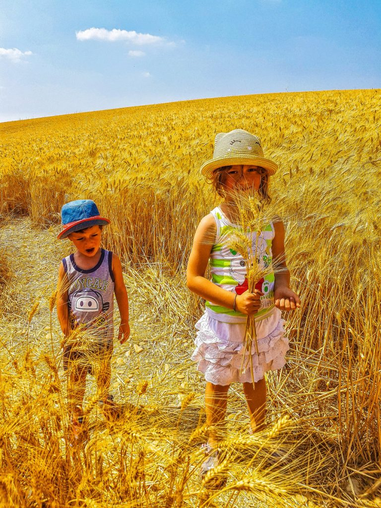 bambini in un campo di grano in Provenza