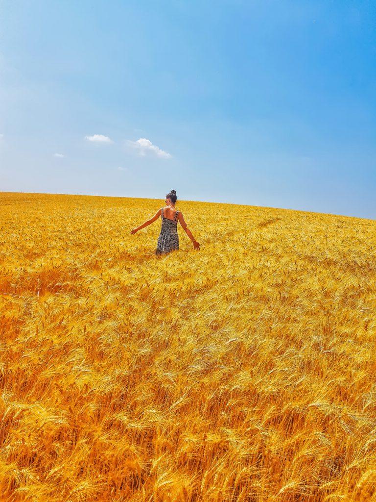 i campi di grano di Valensole in Provenza