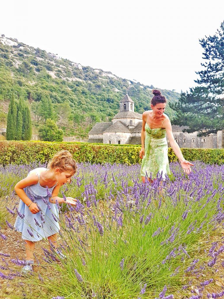 Abbazia di Sénanque e la fioritura dei suoi campi di lavanda