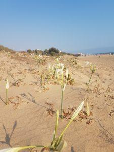 le dune della spiaggia libera di San Leone ad Agrigento