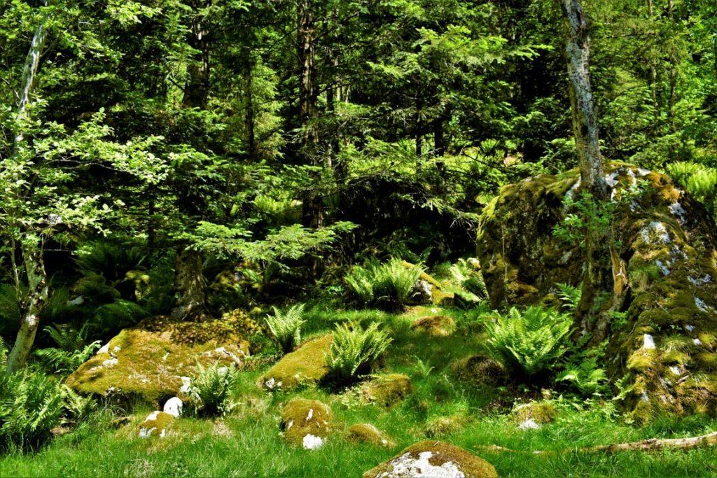 il bosco incantato della Val di Mello