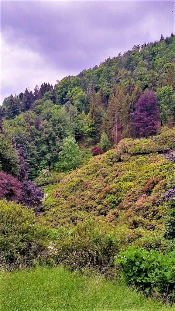 Panoramica della Conca dei Rododendri Oasi Zegna