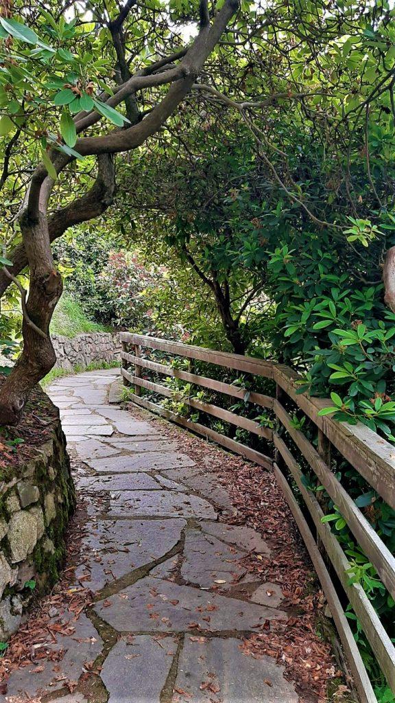 Il sentiero della Conca dei Rododendri Oasi Zegna a Biella