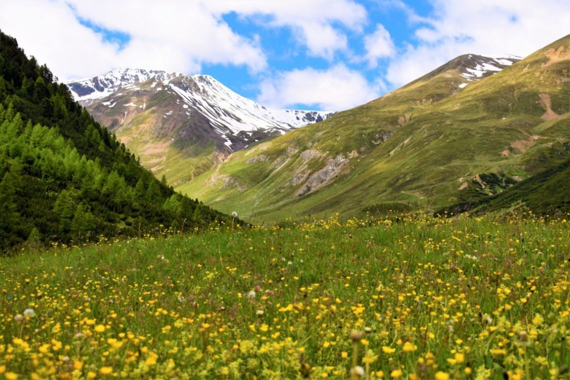 I prati fioriti della Val Federia