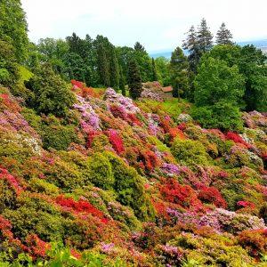Parco della Burcina la conca dei rododendri