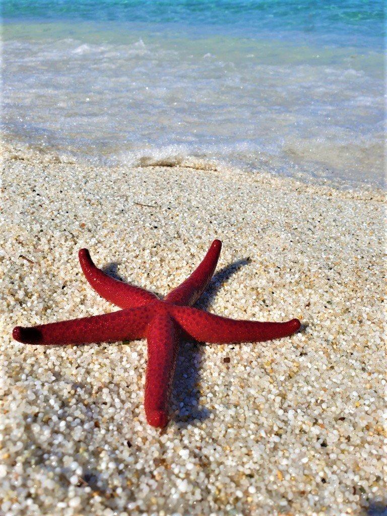 Una stella marina sulle spiagge della Sardegna
