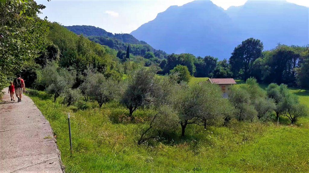 Gli ulivi della Val Monastero natural landscape