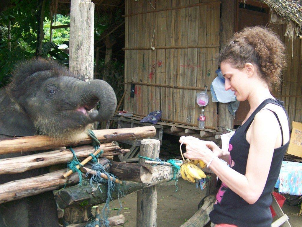 Donna da da mangiare banane a un piccolo elefante