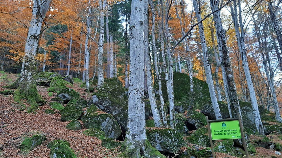 la Foresta dei Bagni di Masino in Lombardia