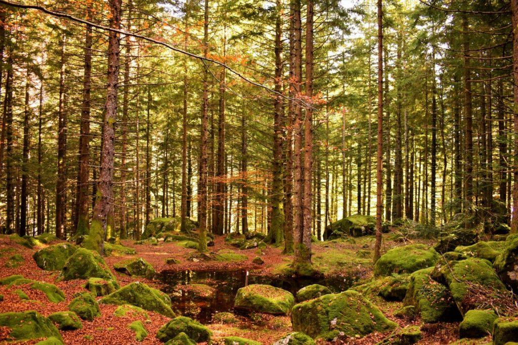 la Foresta dei Sassi dei Bagni di Masino in autunno