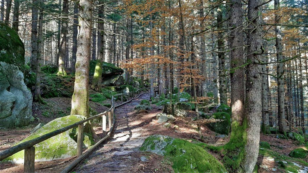 il Sentiero Sensoriale che si snoda lungo la Foresta dei Bagni di Masino
