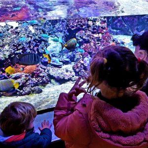 Acquario Civico di Milano con i bambini