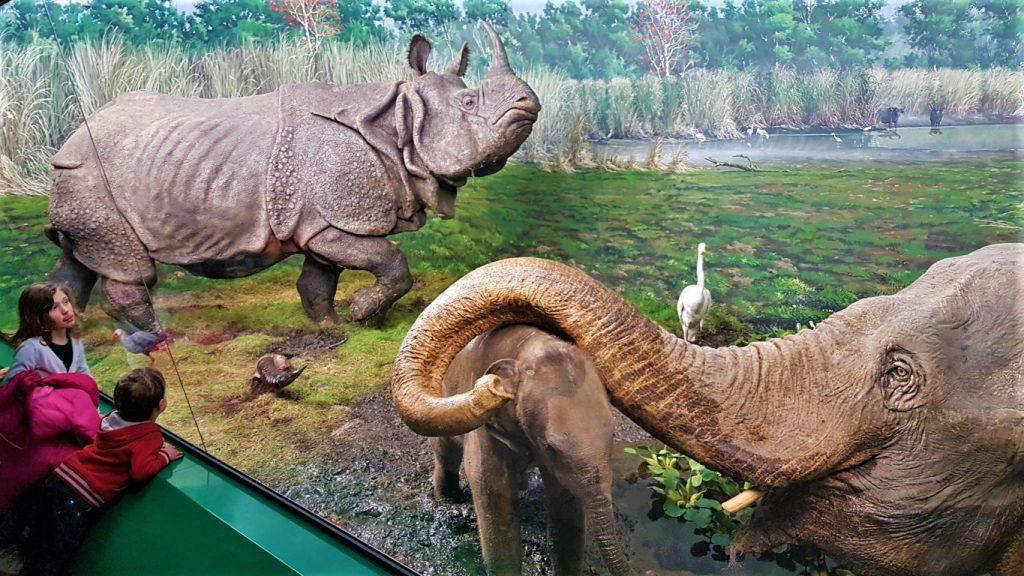 Un diorama di habitat naturale con animali imbalsamati al Museo Storia Naturale di Milano