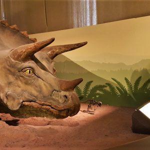 Museo Storia Naturale Milano con bambini