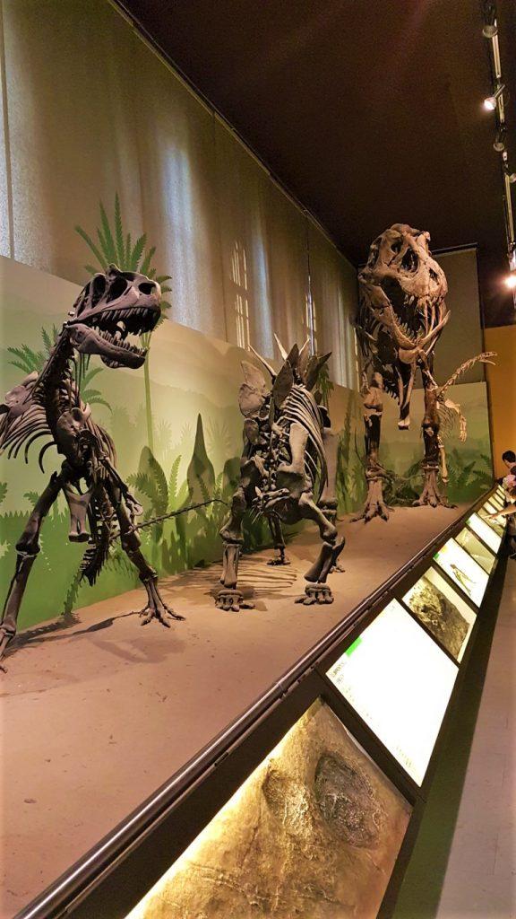 Gli scheletri di dinosauri al Museo Civico di Storia Naturale a Milano