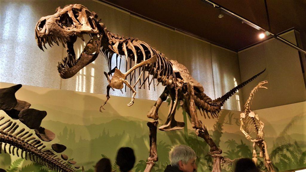 uno scheletro del Tyrannosaurus Rex a Milano