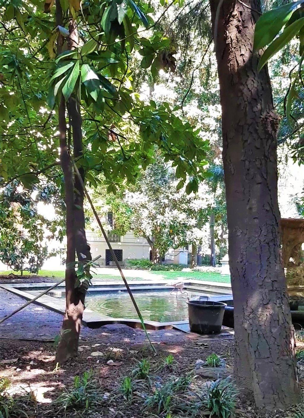 I fenicotteri rosa nel giardino di Villa Invernizzi a Milano
