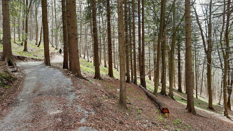 Piani dei Resinelli sentieri nel bosco del Parco Valentino